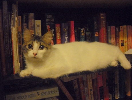 Kitty loves books.